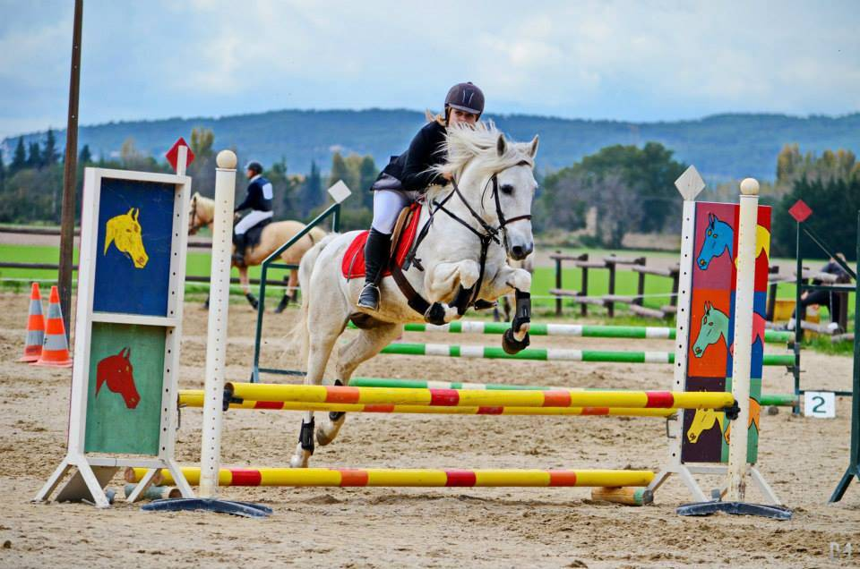 Stage d 39 quitation saut d 39 obstacles cso pr s de cavaillon cours d 39 quitation lagnes 84 haras - Frison saut d obstacle ...